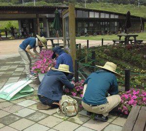 公園管理ジョブトレーニングの様子